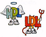 The Difference Between LDL And HDL