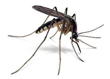 How to Get Rid Of Mosquitoes